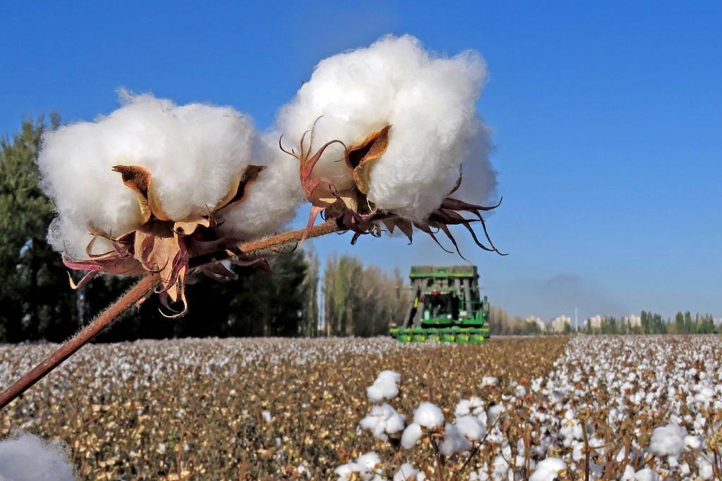 荣牌医纺|我们支持新疆棉花!